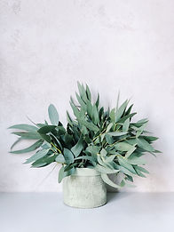 photo-of-plants-on-white-pot-970089.jpg
