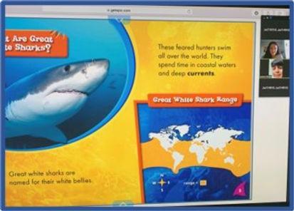 Sharks RAA.jpg