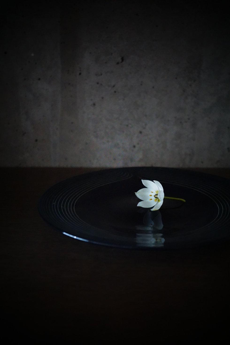 Frescoのガラス食器、hibikiは音の「響き」を表現して波紋のような美しいプレートで料理の美味しさを引き立てます。