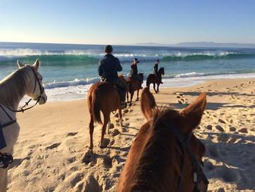 cavalos-na-areia.jpg