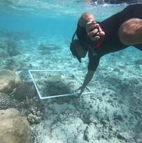 Reef survey at Kavera - Akau Film