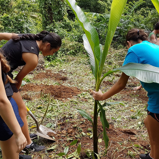 Utu planting up Takuvaine Valley - Rongohiva