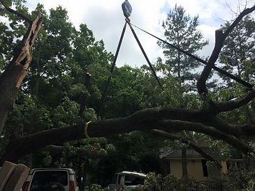 Tree Removal/ Crane Job