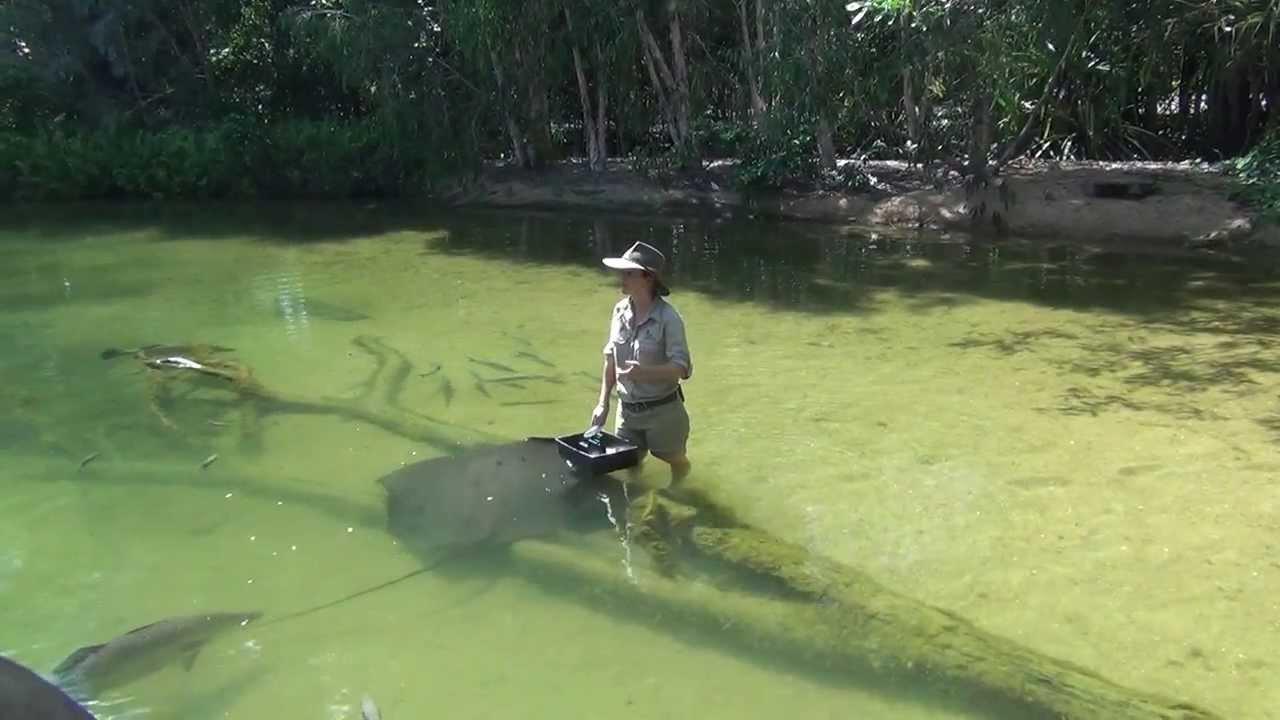 territory wildlife park rays