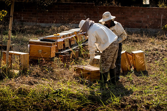 Beekeeper in protective workwear inspect