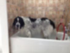 chien dans bain