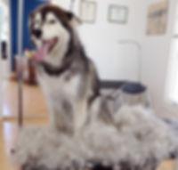 chien au séchage