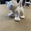 Thumbnail: Standing Cat