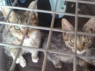 TNVR Improves Animal Welfare