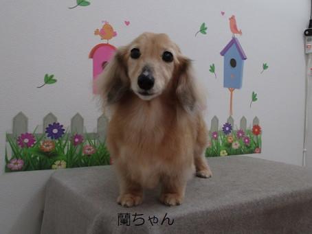 おじいちゃん(犬)…(:″*゜;)