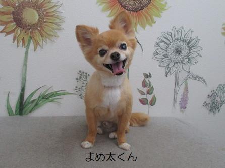 急に寒っ(((・×・;)))ブルブル