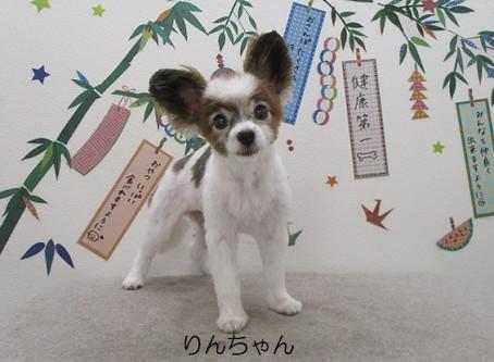 夏本番!♪(A;´з`)