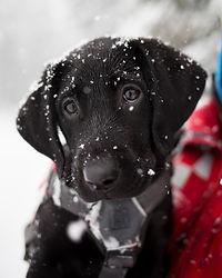 Iggy | Puppy | CMRD
