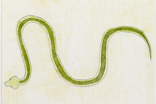 Snake by Neville Jermyn