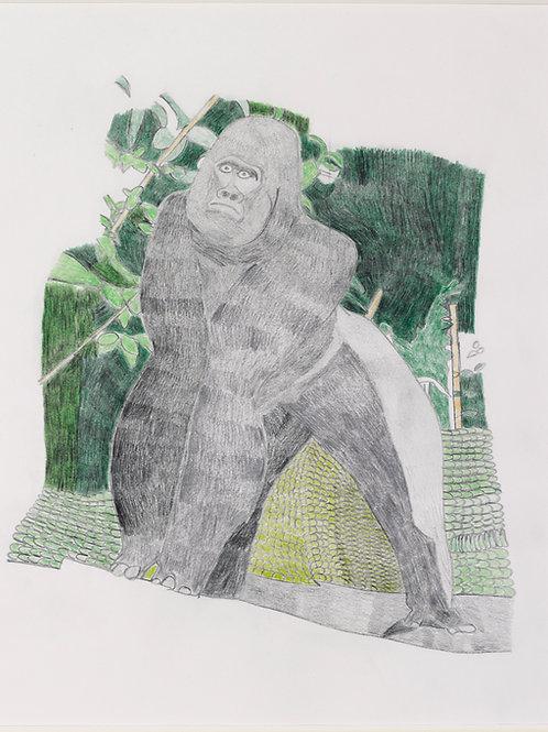 Gorilla by Neville Jermyn
