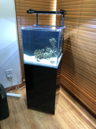 Minireef 90 Aquarium