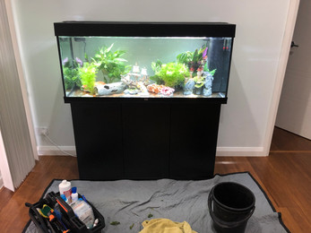 Juwel Rio 240 with ornaments and plants added