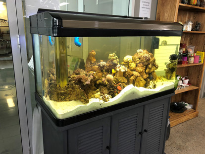 Aquarium refurbished and coming along