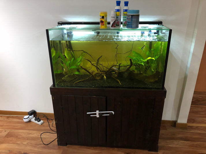 Freshwater Aquarium Before Relocating