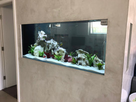 Custom In Wall Aquarium