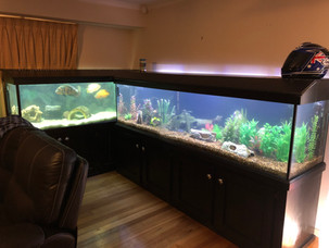 Two Large Aquariums Needing a Clean