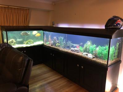 Two Large Aquariums Needing a Clean