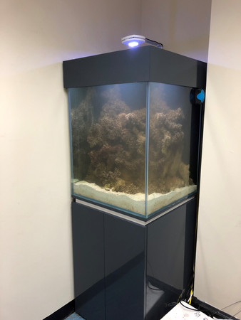 Corner Aquarium in Business