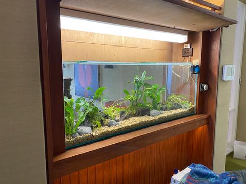 Adding Decor to New Aquarium