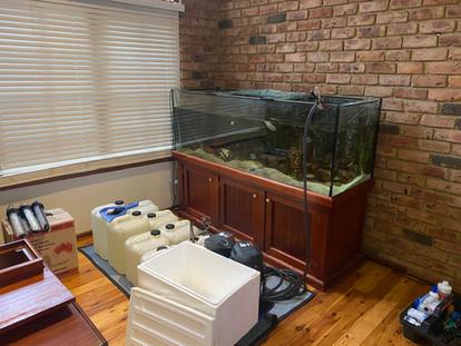 Emptying of Aquarium