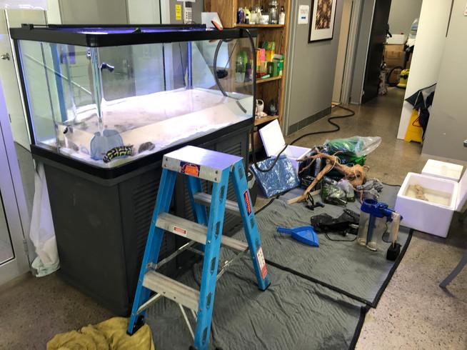 Marine Aquarium being emptied
