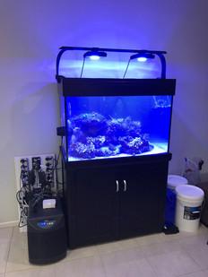 AquaReef 300 After Move