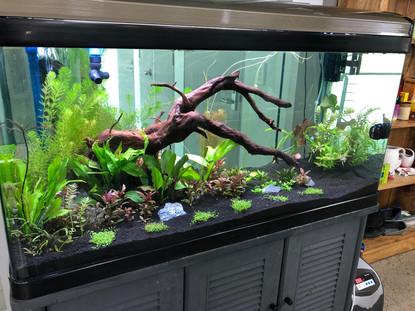 Aquarium one month later