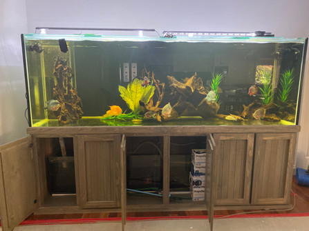 9ft Aquarium ready to be relocated to adjacent room