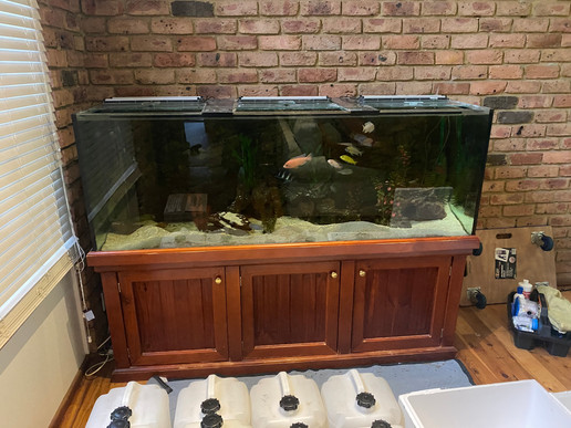 6ft Cichlid Aquarium Ready for Relocation