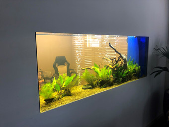 Just filled in wall Aquarium