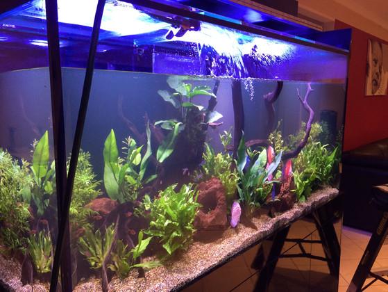 Aquarium being Filled