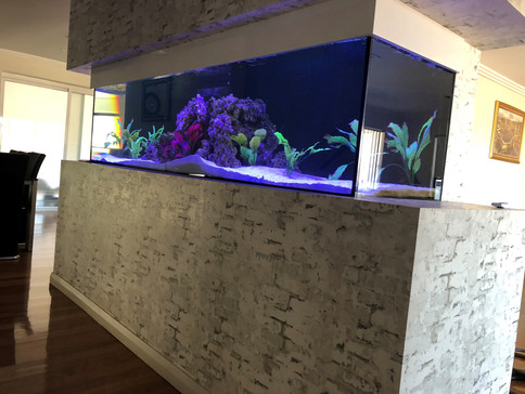 Custom in wall Cichlid Aquarium