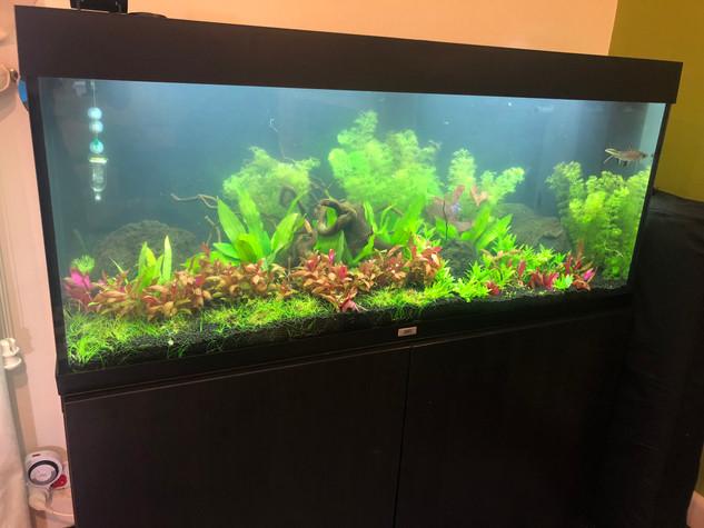 Juwel Rio 240 planted Aquarium