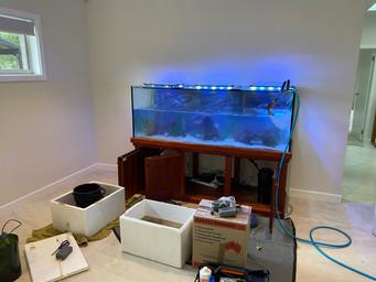 6ft Cichlid Aquarium being re setup