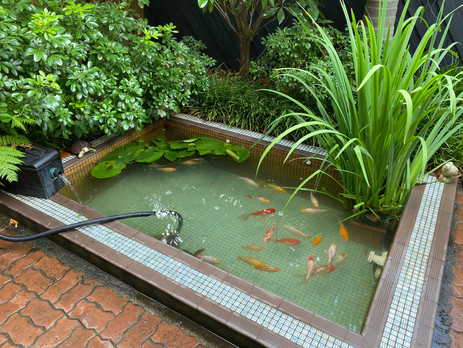 Pond after a clean