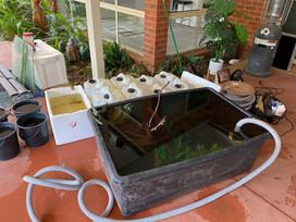 Storage pond to house fish during relocation