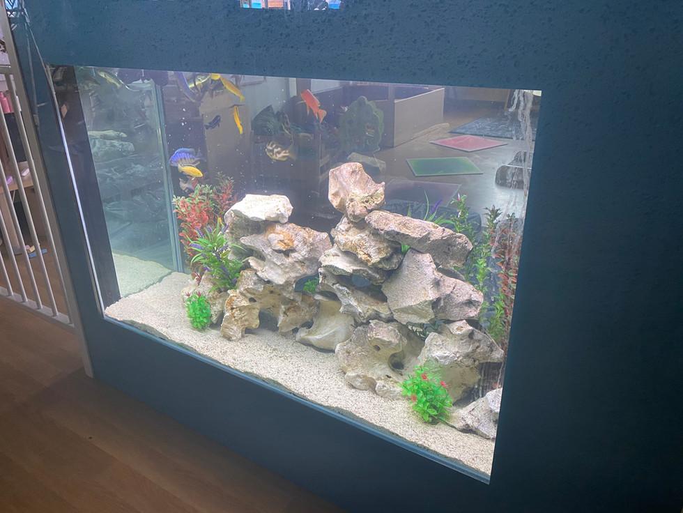 Custom Cichlid Aquarium