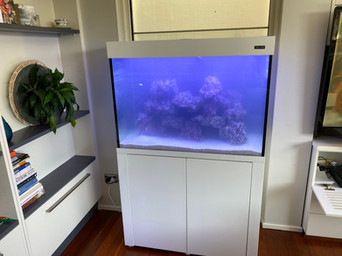 Newly Filled Aquarium