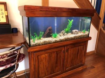 4 foot mixed tropical aquarium