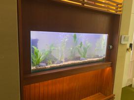 Newly Filled New Aquarium