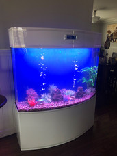 Acrylic Aquarium Awaiting Fish