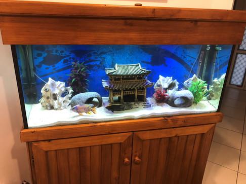 4 Foot Cichlid Aquarium