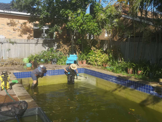 Swimming Pool/Pond Cleanout
