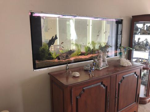 New aquarium filled
