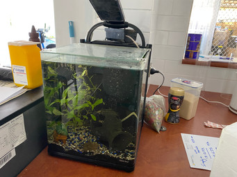 Aquarium Relocation from NSW to QLD